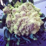 My first thought when I saw the romanesco was: is that an example of naturally-occurring fractals?