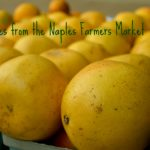 Scenes from the Naples Farmers Market