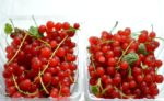 Farmers Market Find: Red Currants