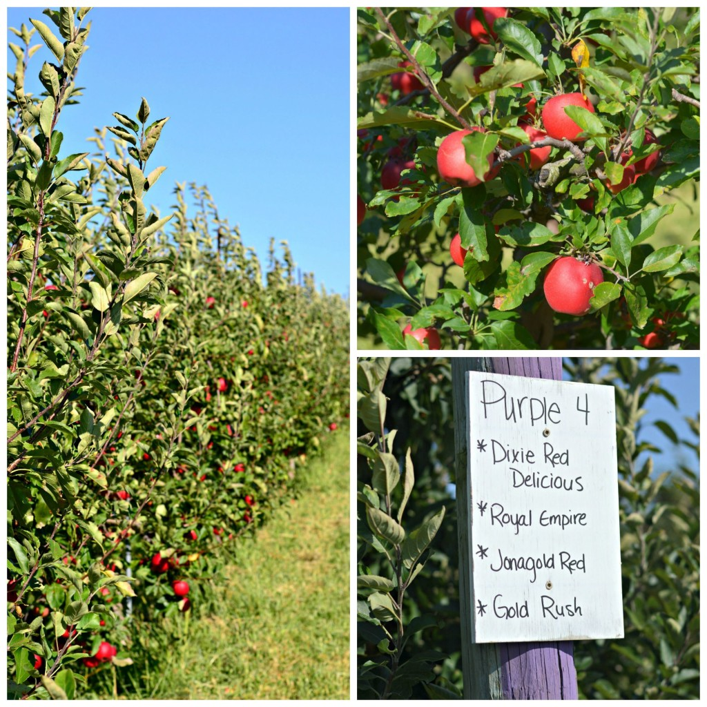 A Trip To The Orchard And An Apple Recipe Round-Up