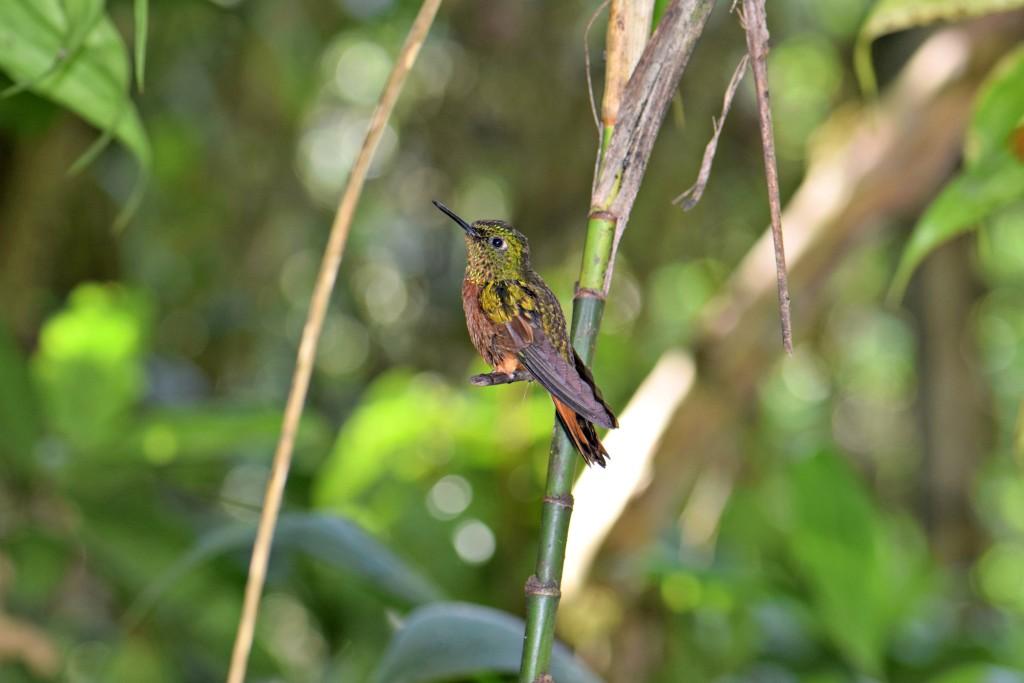 A hummingbird at the Inkaterra Machu Picchu Pueblo