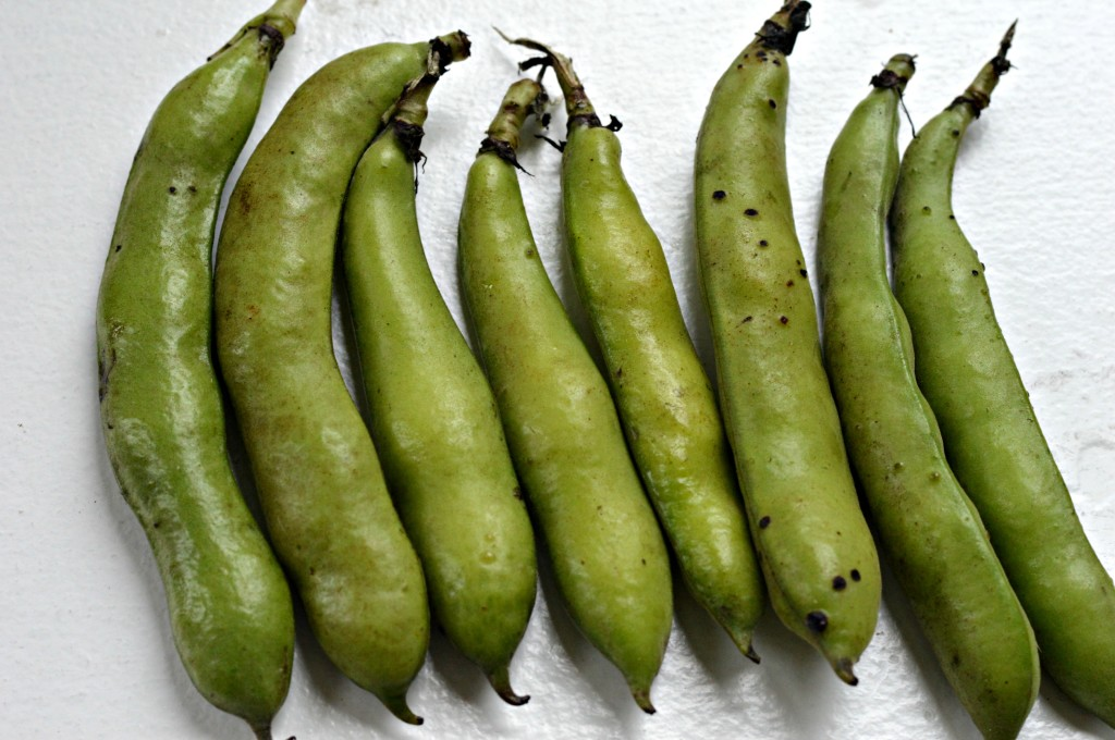 Farmers Market Find Fava Beans West